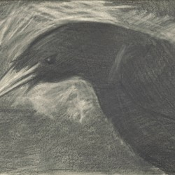97: Birds 01