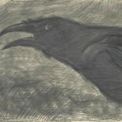 100: Birds 04