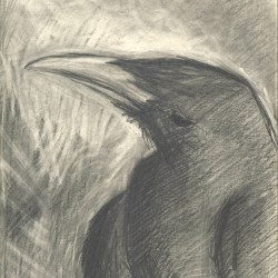 102: Birds 06