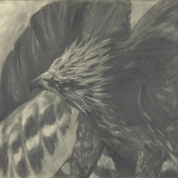 104: Birds 08