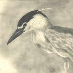 105: Birds 09